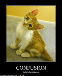 "Orange tabby kitten ""confusion"""